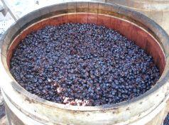 Dessert wine fermentation