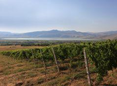 Amynteo vineyards