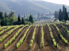 Aghio Oros Vineyards