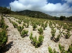 Kephalonia vineyards