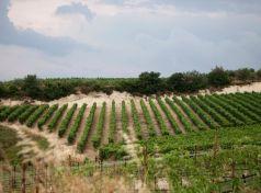 Mantinia vineyards