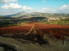 Nemea vineyards