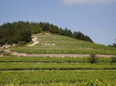 Mountain terroir